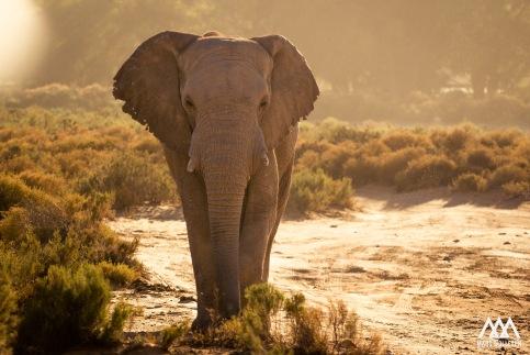 safari_edit147